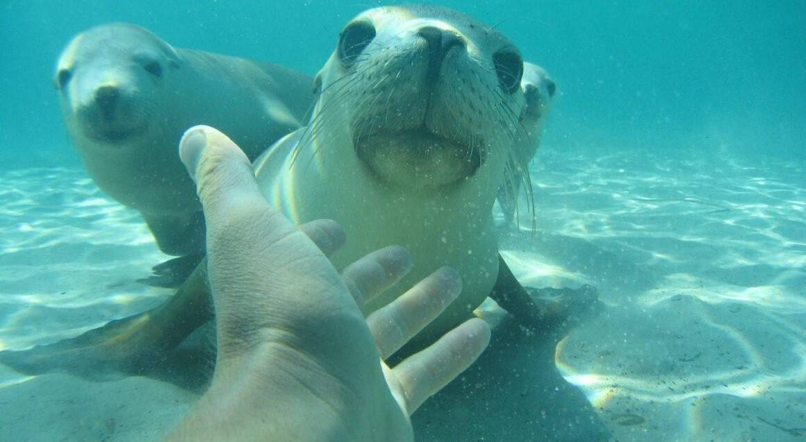 Swim with Sea Lions in Port Lincoln - Child