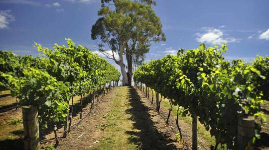 Adelaide Hills and Hahndorf Food and Wine Tour