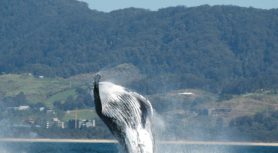 Coffs Harbour Whale Watching Cruise - Child