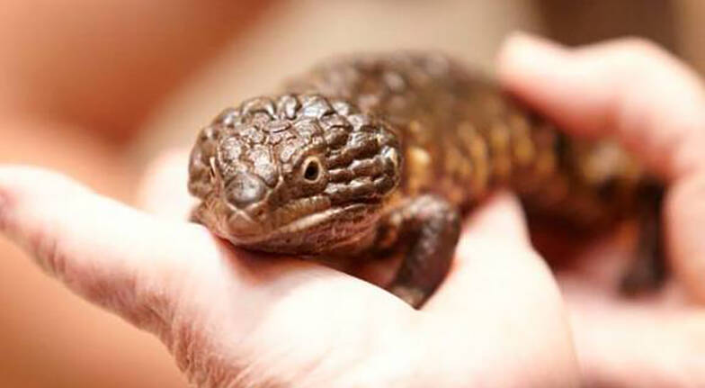 Online Reptiles Experience for Kids  1 Hour