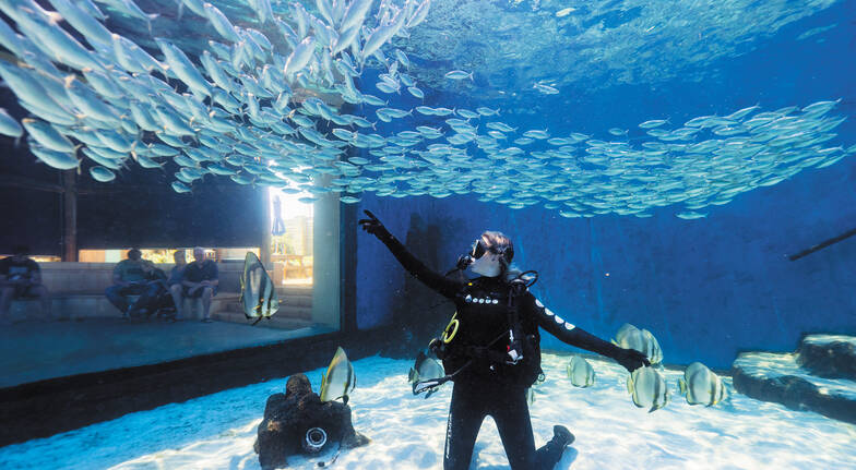 Dive with Sharks at The Aquarium of Western Australia
