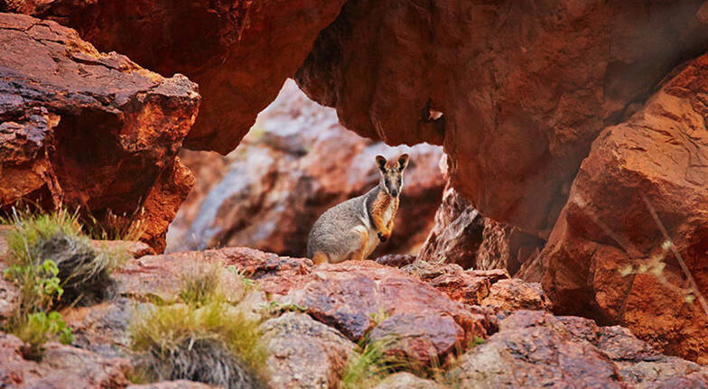 Flinders Ranges Stay with Dinner Wine and Tours  2 Nights