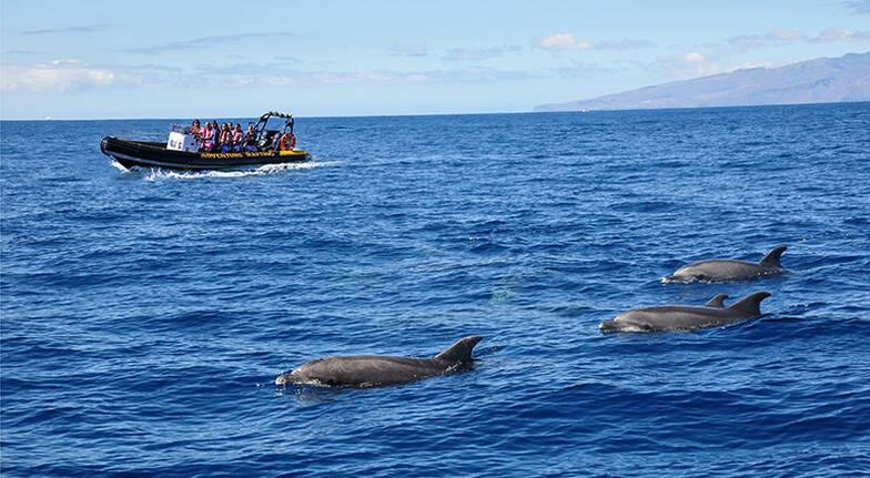 Wildlife Safari and Adventure Rafting  60 Minutes