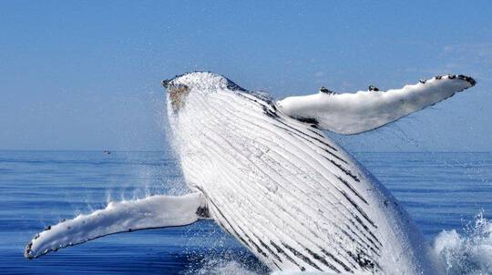 Busselton Whale Watching Cruise - 2 Hours