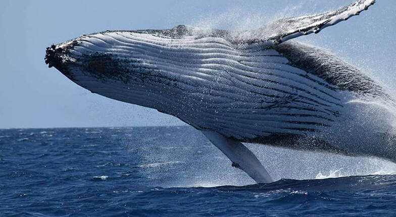 Busselton Whale Watching Cruise  2 Hours