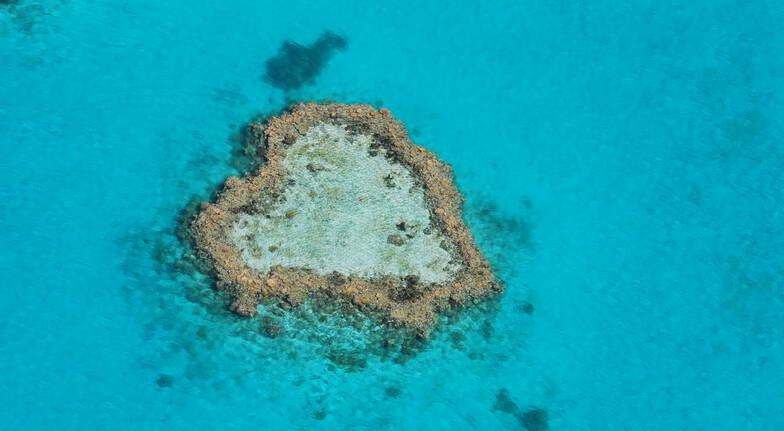 Scenic Reef Flight with Glass Bottom Boat and Snorkelling