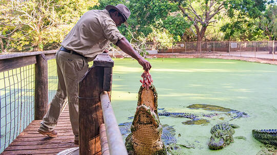 Broome Crocodile Feeding Tour with Park Entry and Transfers