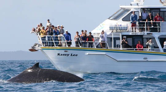 Winter Whale Watching Cruise with Lunch - 4 Hours