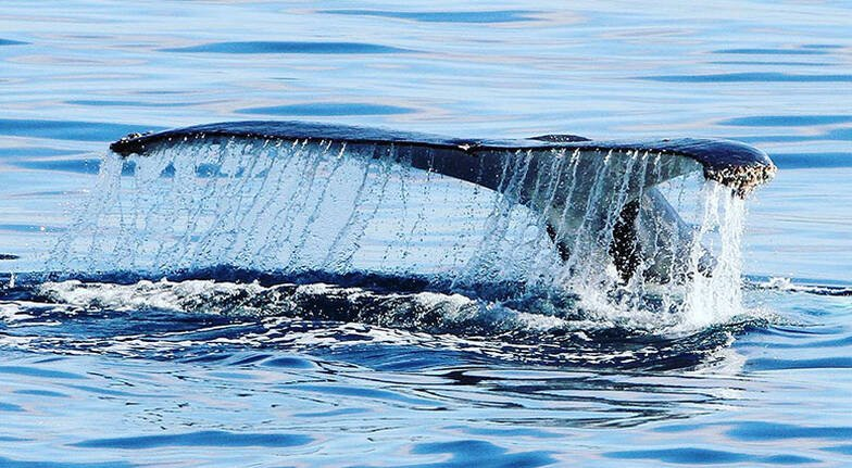 Luxury Whale Watching Yacht Cruise - Gold Coast - 2.5 Hours