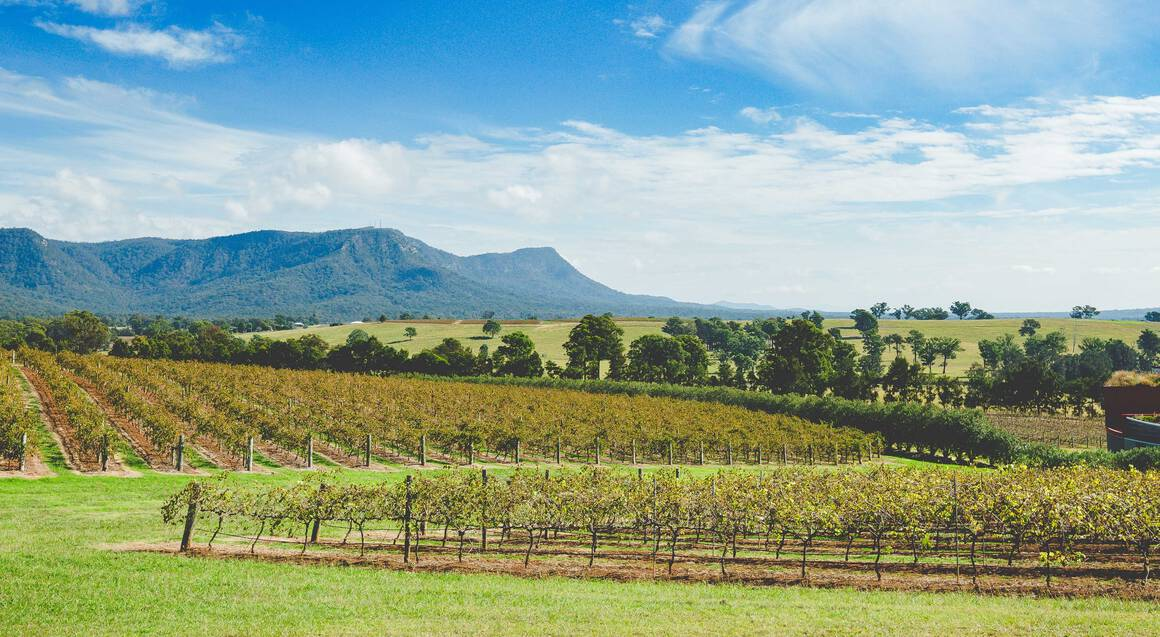 Hunter Valley Winery Tour