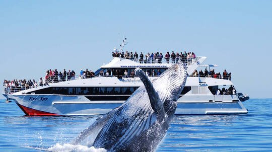 Brisbane Whale Watching Cruise - Full Day