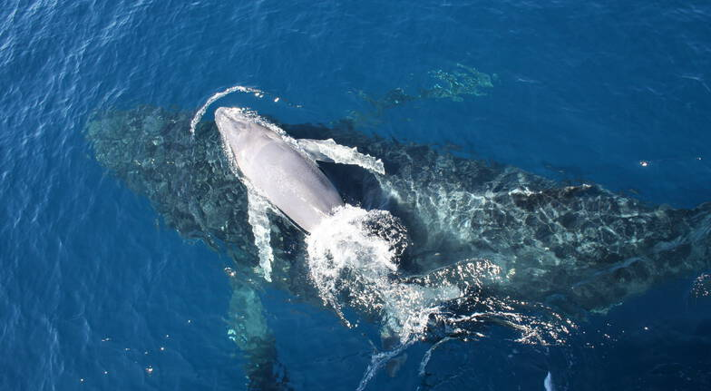 VIP Brisbane Whale Watching Cruise