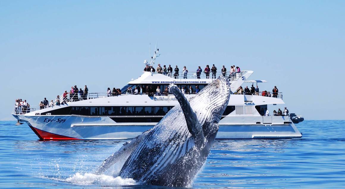 VIP Brisbane Whale Watching Cruise