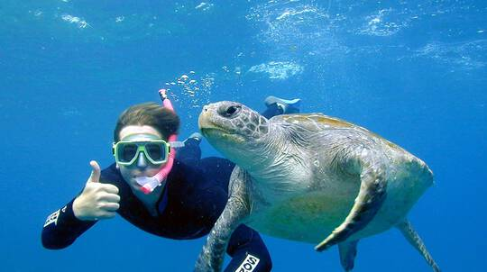 Sea Turtle Snorkel Tour at Julian Rocks