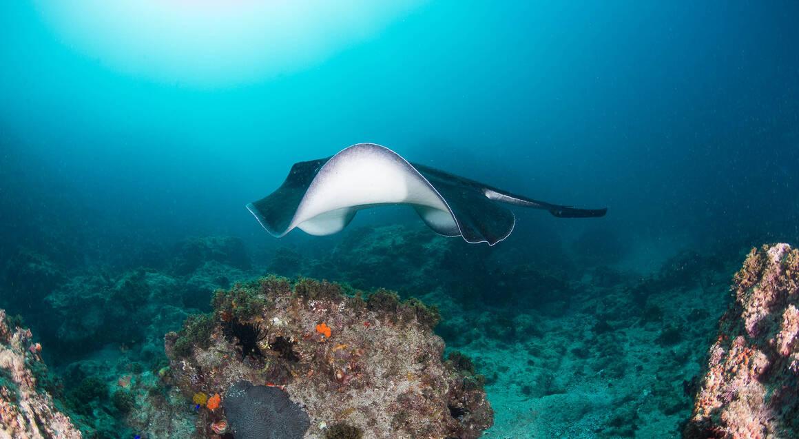 Introductory Scuba Dive Course at Julian Rocks