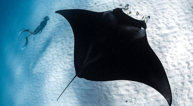 Coral Bay Swim with Manta Rays Tour with Lunch