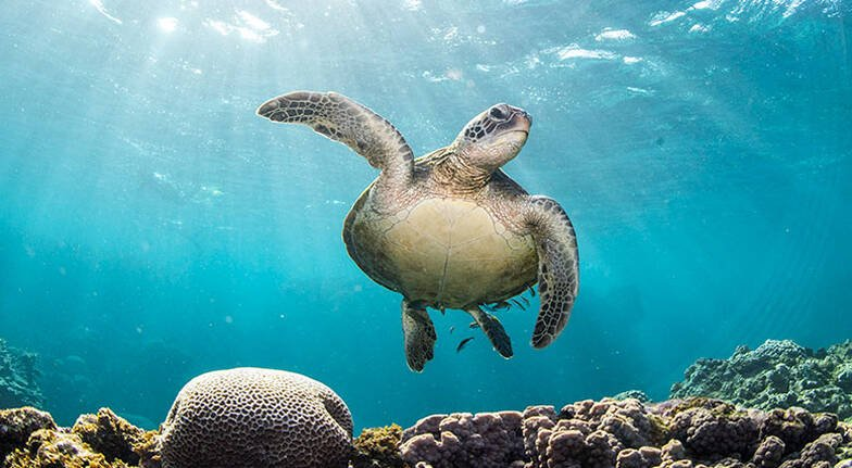 Ningaloo Reef Glass Bottom Boat Turtle Eco Tour - 3 Hours