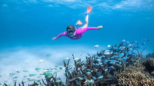Ningaloo Reef Coral Viewing and Snorkelling Tour - 2 Hours