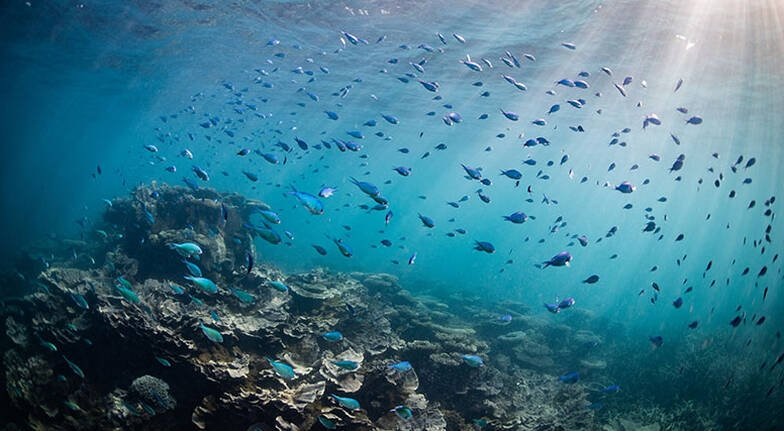 Ningaloo Reef Coral Viewing and Snorkelling Tour  2 Hours