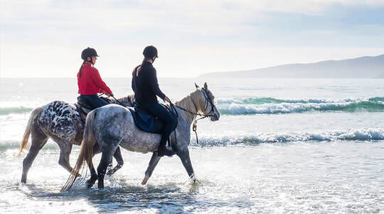 Horse Riding on Bakers Beach - 3 Hours