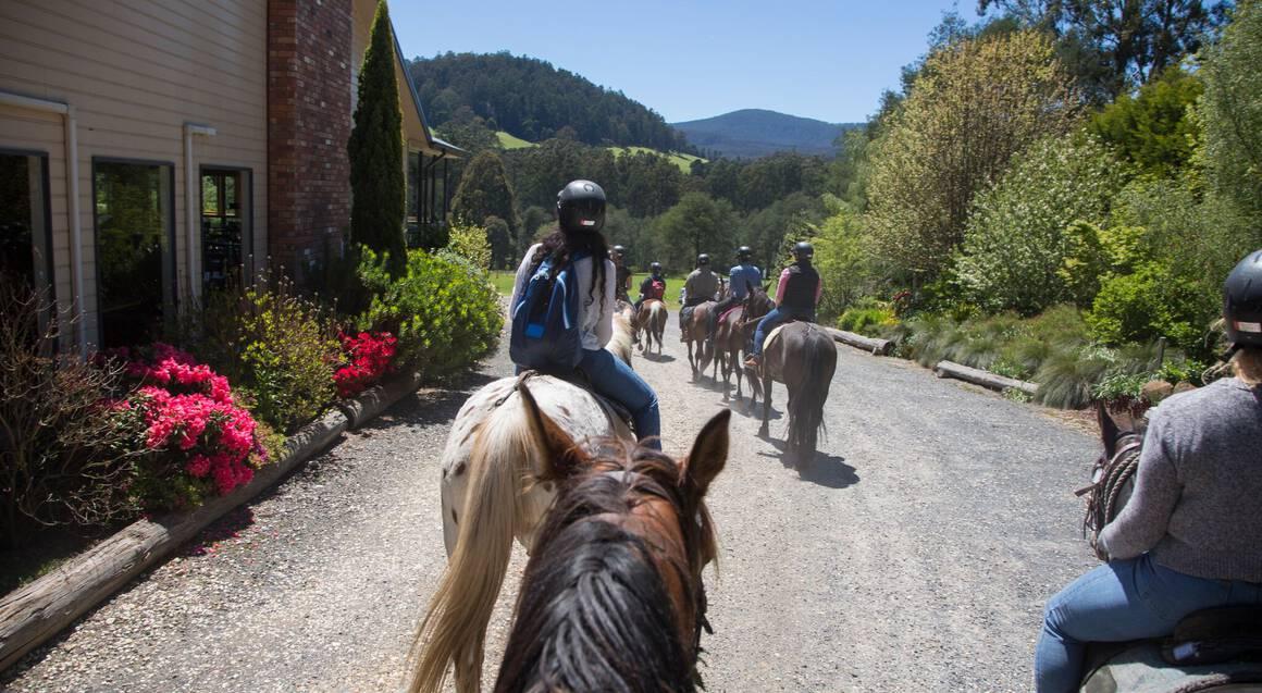 Full Day Yarra Valley Pub Horse Ride