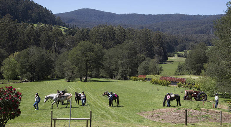 Yarra Valley Horse Trail Ride with Wine Tasting  25 Hours