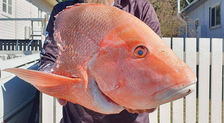 Private Island Fishing Charter with Whitehaven Beach Visit