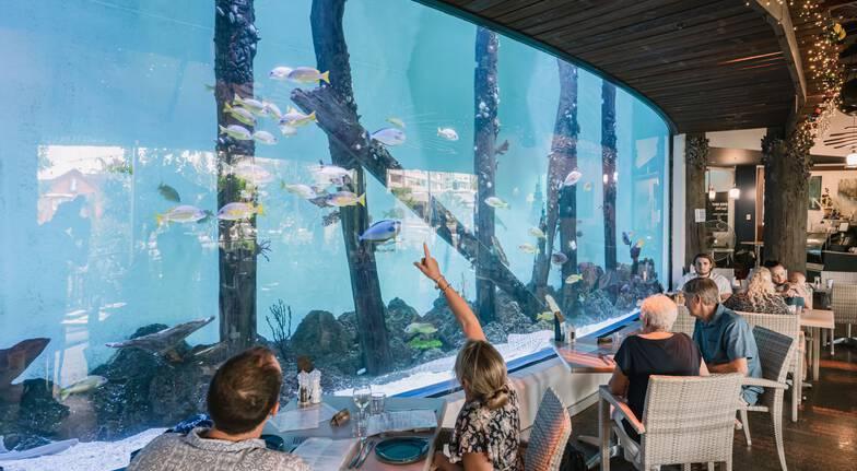 Cairns Aquarium at Twilight with 3 Course Dinner