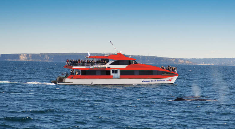 Taronga Zoo and Whale Watching Cruise Experience