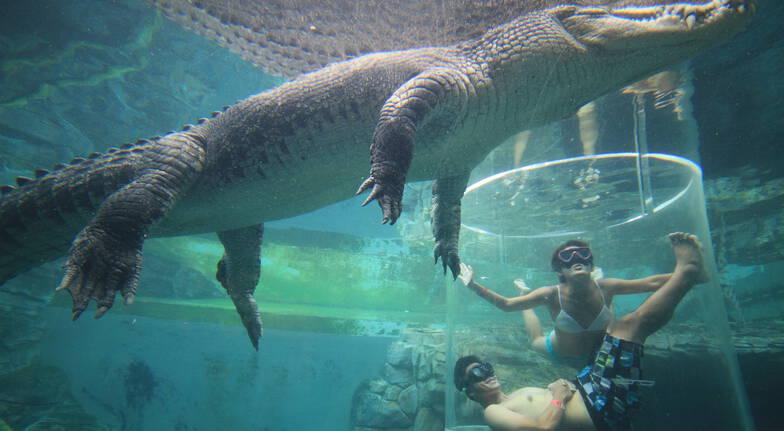 Crocodile Cage of Death at Crocosaurus Cove