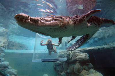 Crocodile Cage of Death at Crocosaurus Cove