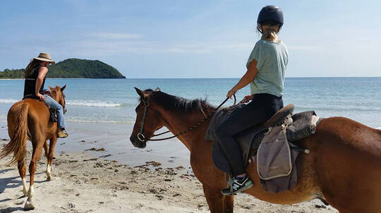 Cape Tribulation Beach Horse Riding - Afternoon - 90 Minutes