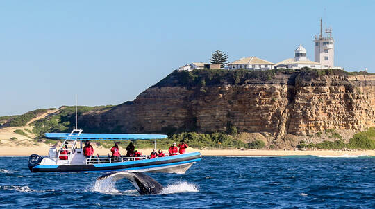 Humpback Whale Watching Tour From Newcastle