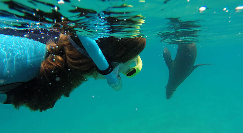 Swim with Wild Dolphins and Seals  For 2