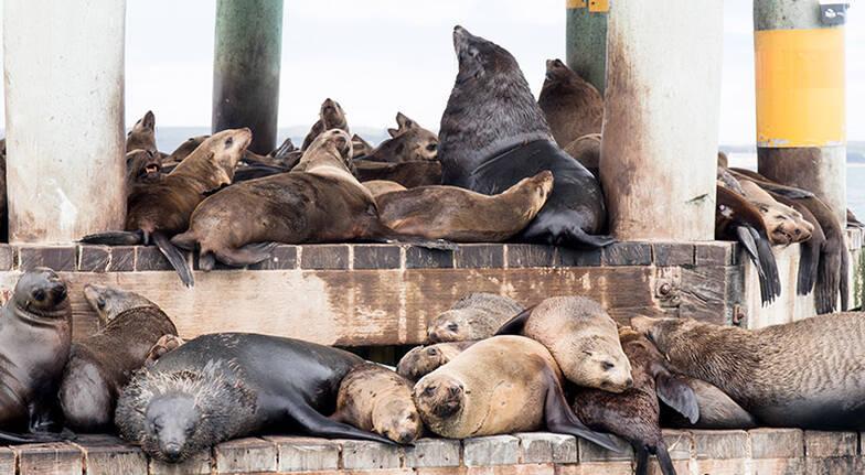 Local Wildlife Sightseeing Cruise  90 Minutes