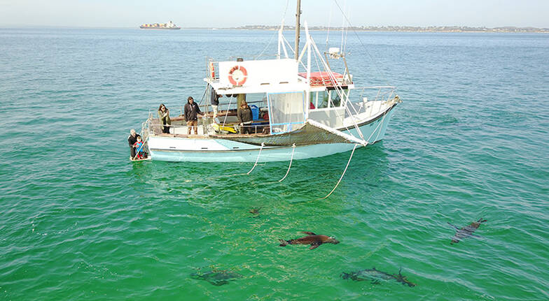 90 Minute Seal and Dolphin Cruise - For 2