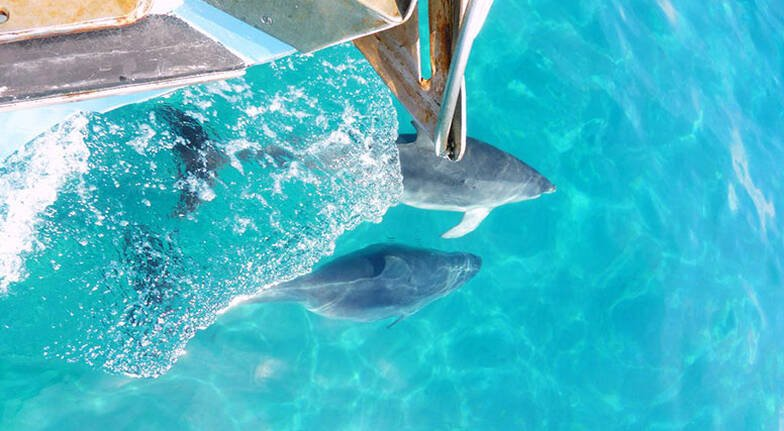 Swim with Seals and Dolphins and Surf Lesson Combo Package