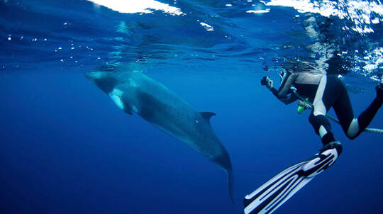 Minke Whale Scuba Diving Expedition with Meals - 4 Nights