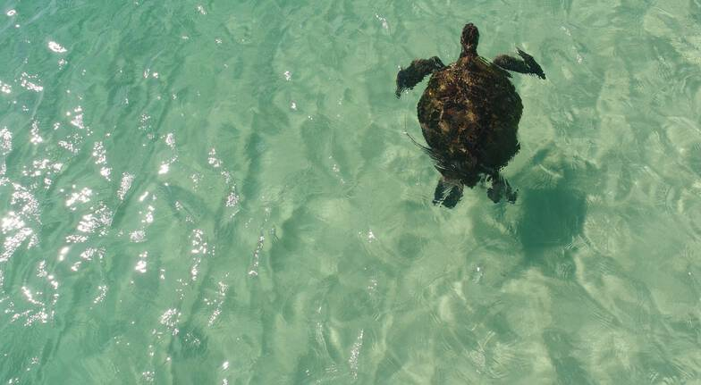 Eco Marine Safari Cruise with Buffet Lunch and Transfers