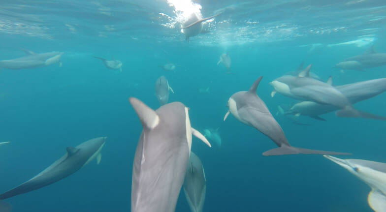 Swim with Wild Dolphins - 4 Hours