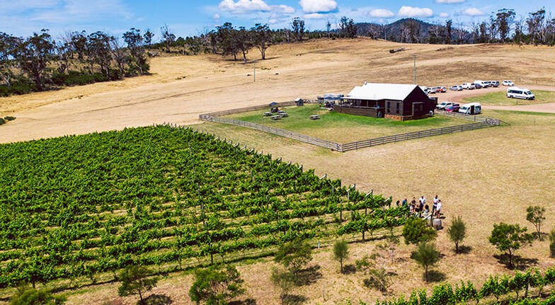 Full Day Tasmanian Winery Tour with Tastings