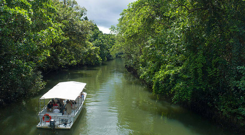 Reef Scenic Flight Daintree River Cruise and More  For 2