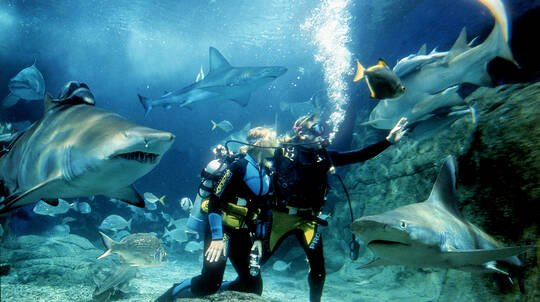 Shark Diving at SEA LIFE Melbourne Aquarium - For 2