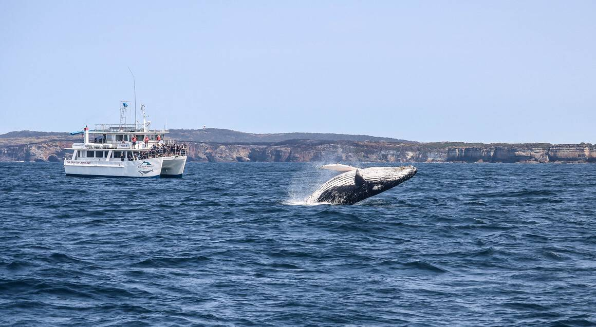 Whale Watching Cruise Jervis Bay
