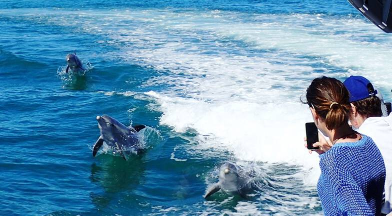 Dolphin, Penguin and Sea Lion Adventure Cruise