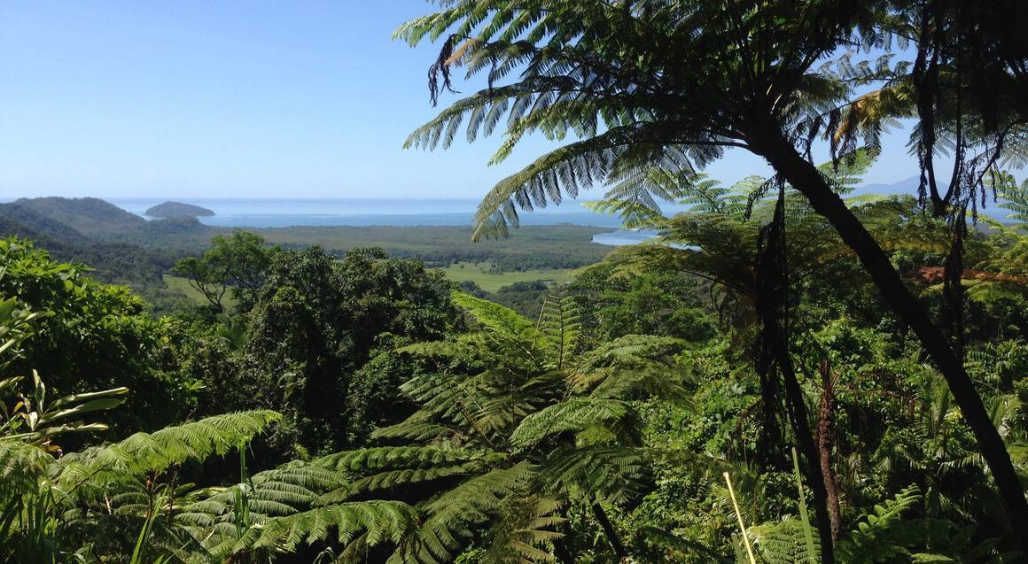 Guided Daintree Rainforest Tour - Full Day