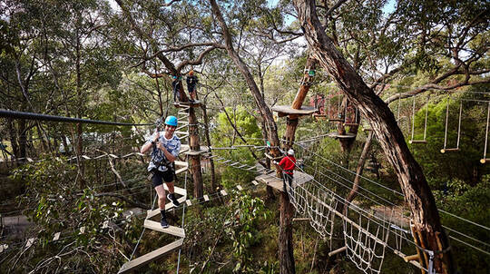 Tree Surfing and Beer Tasting Adventure - For 2