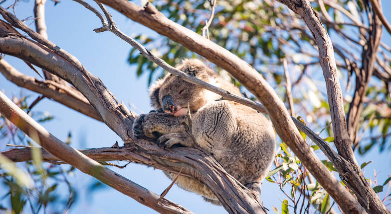Kangaroo Island Wildlife Discovery Private Day Tour - Group