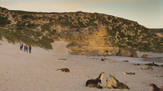 Private Kangaroo Island Landscape and Wildlife Tour - For 2