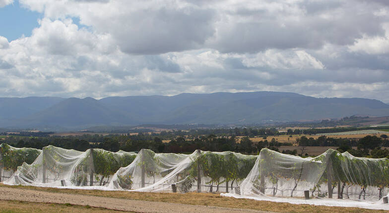 Full Day Yarra Valley Food and Wine Tour